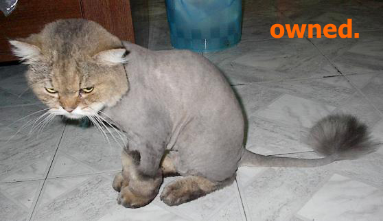 [Image: owned-cat_shaved.jpg]