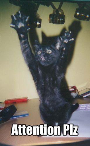 attention_cat.jpg