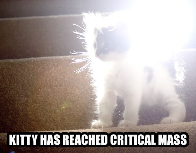 critical mass cat