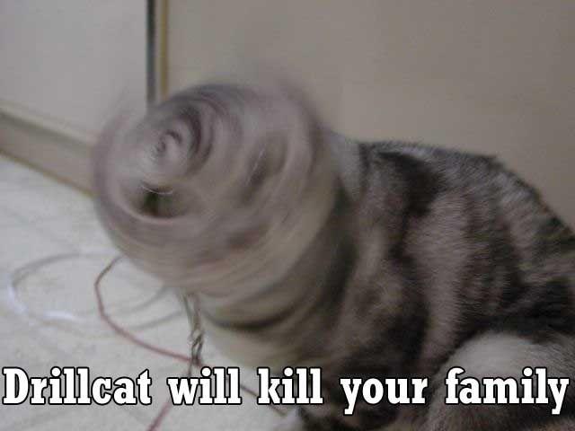 drill_cat.jpg