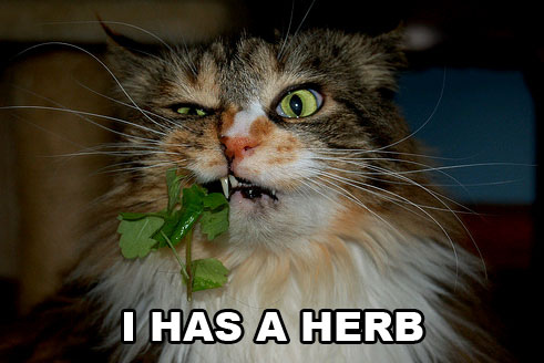 I has a Herb