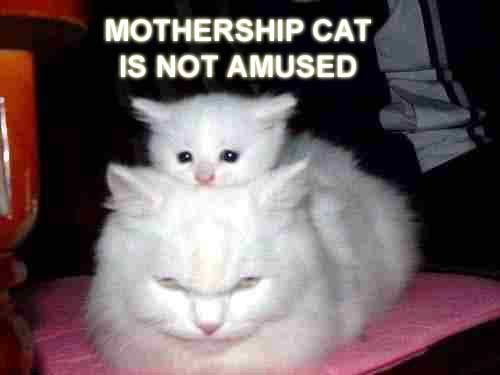 mothershipcat