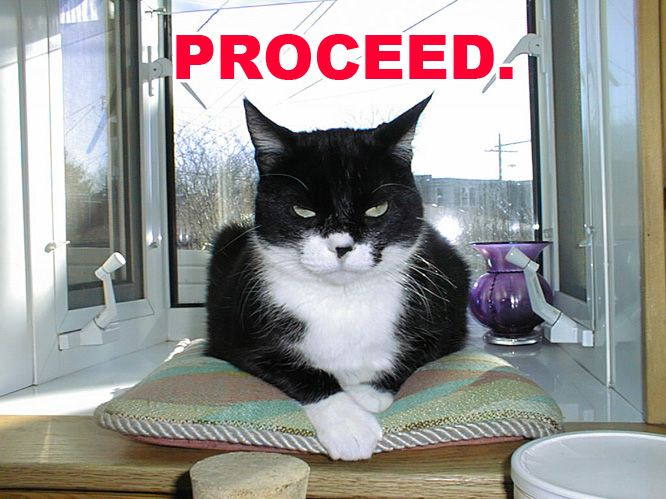 proceed cat