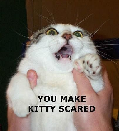 [Image: scared_cat.jpg]