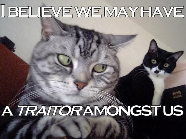 traitor cat