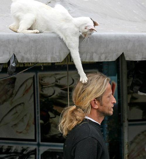 cat_181.jpg