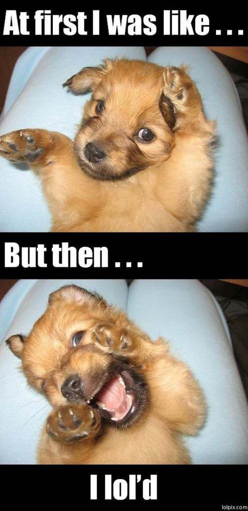 Lol pup