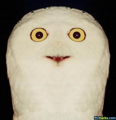 http://www.threadbombing.com/data/media/24/pichacks_orly_owl_1.jpg