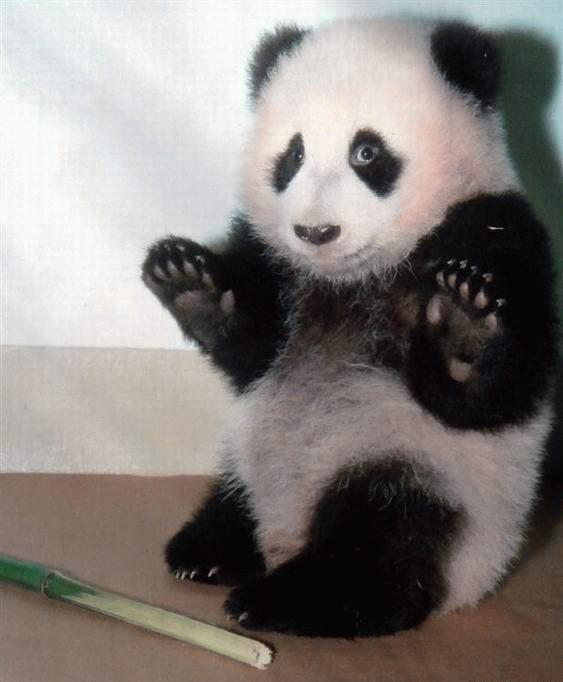 Tribal Council 8 (Barramundi) Surprised_Panda