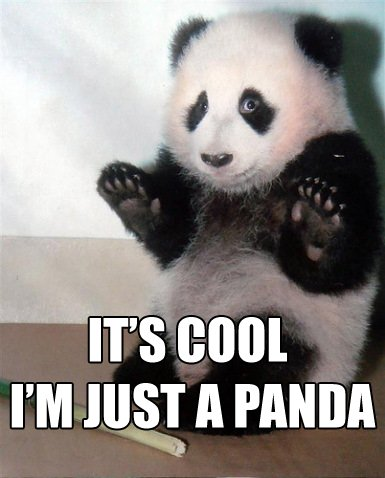 its_cool_panda.jpg