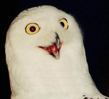 orly_owl.jpg