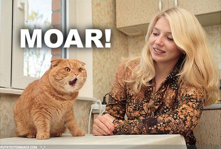 moar_cat2.jpg