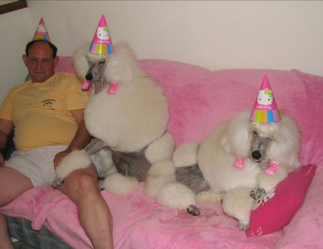 Partying with Poodles