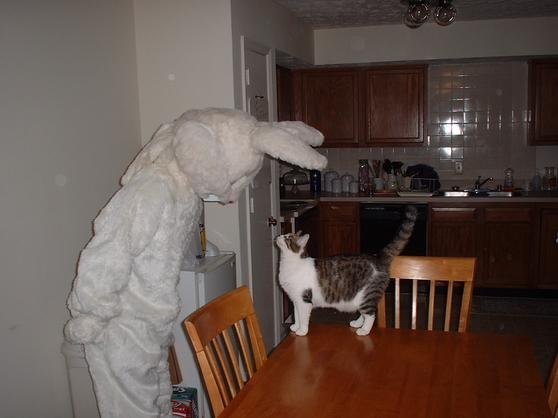 Easter Bunny and Cat
