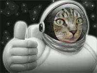 Space Cat Approves