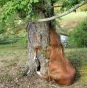 Horse in Tree